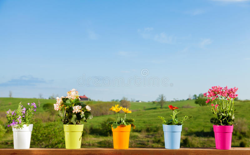 Download Potted Flowers Royalty Free Stock Image - Image: 28983466
