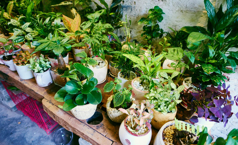 Potted flowers shop. Interior of flower shop. Many potted flowers in old flower store royalty free stock photography