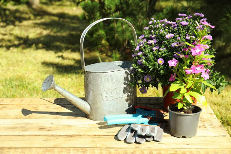 Potted flowers and gardening tools on table stock images