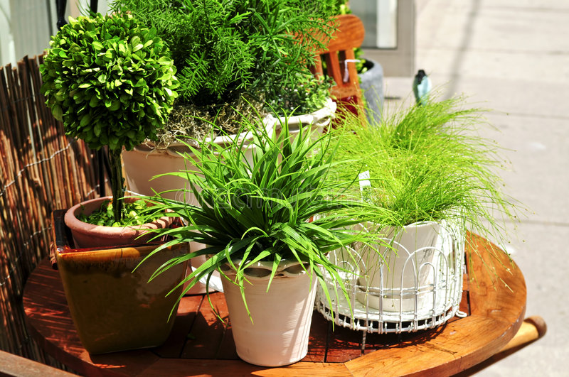 Potted green plants stock photography