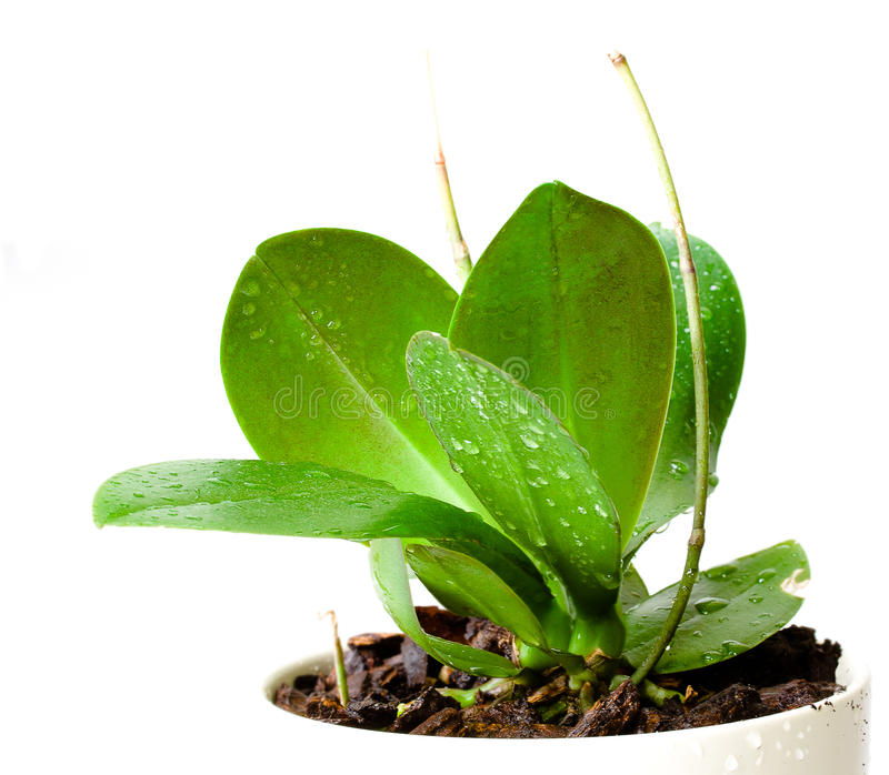 Potted plant stock photo Image of spring, botany, detail 21516568 ~ 01000848_Sukkulenten Ableger In Wasser