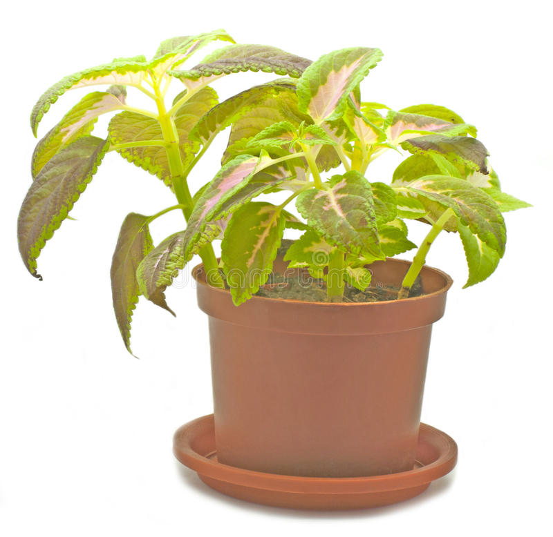 Free Potted Plant Royalty Free Stock Photos - 22359648