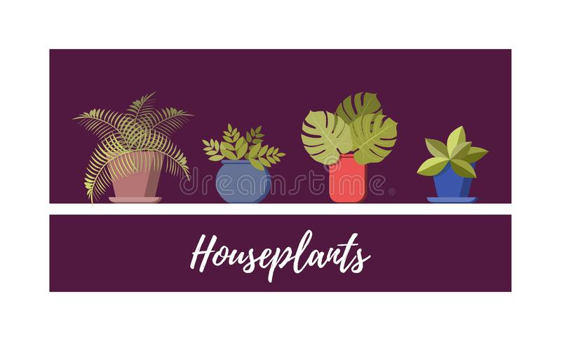 Potted plant collection. Different house plants set, vector flat cartoon illustration vector illustration