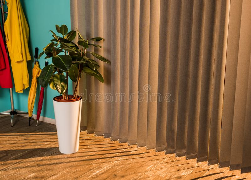 potted plant with green leaves on floor with shadow stock photography