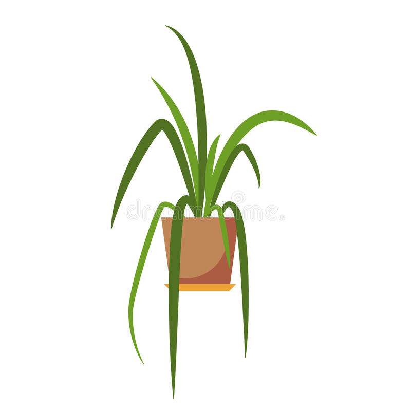 Potted plant . royalty free illustration
