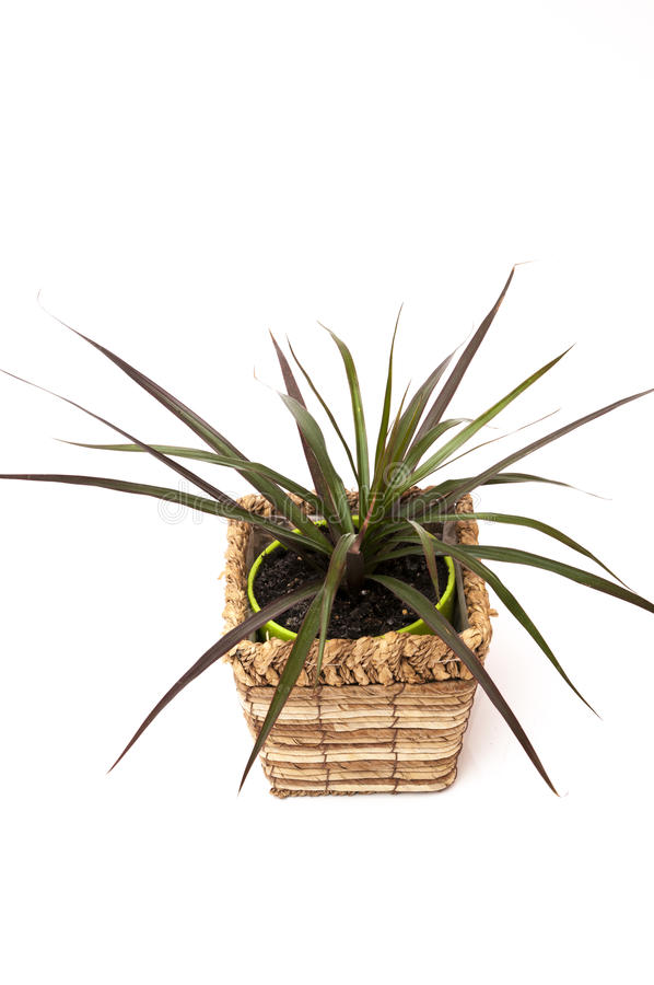 Download Potted plant stock photo. Image of nature, beauty, bright - 39503050