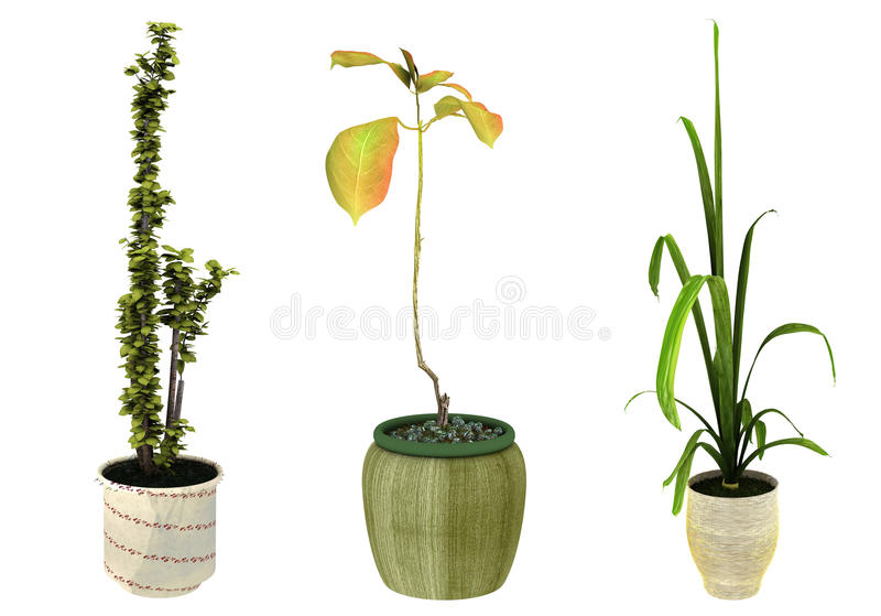 Download Potted Plants stock illustration. Illustration of plant - 14352831