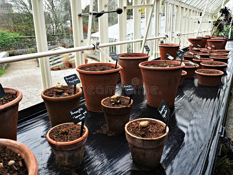 Potted plants on a bench in a greenhouse stock images