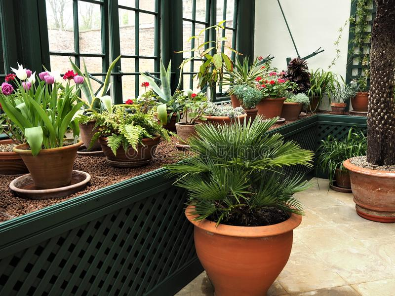 Potted plants growing in a conservatory with a window stock photos