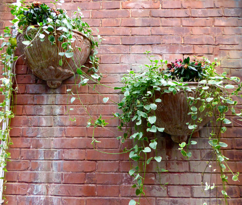 Potted plants hanging on the wall royalty free stock photography
