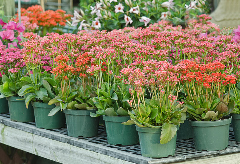 Download Potted plants in nursery stock photo. Image of bedding - 19051170