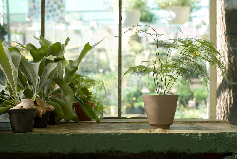 Download Potted Plants On Table In Greenhouse Stock Photo - Image: 10090142