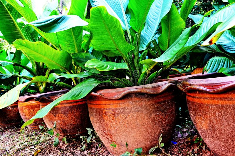 Potted plants . stock image