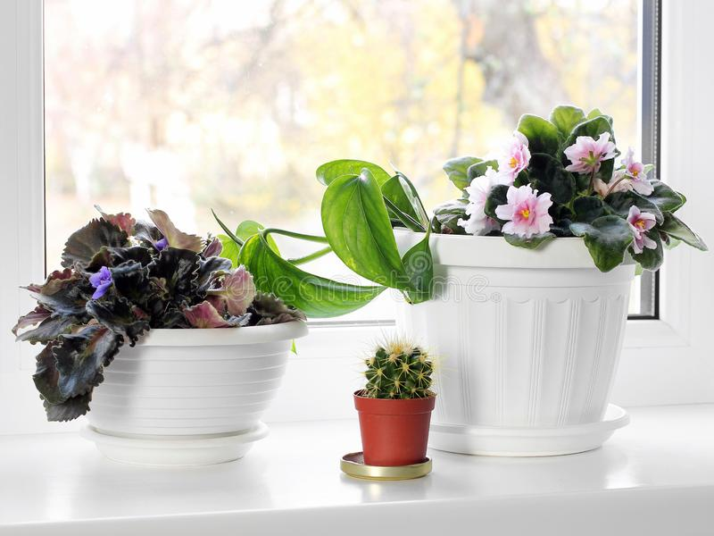 Potted plants on the windowsill stock photo
