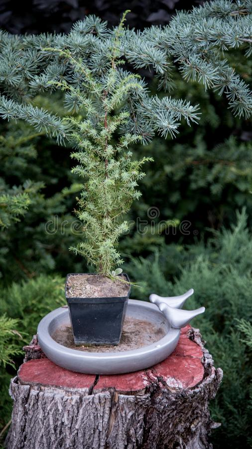 Potted tree sitting on a log with garden in background stock image