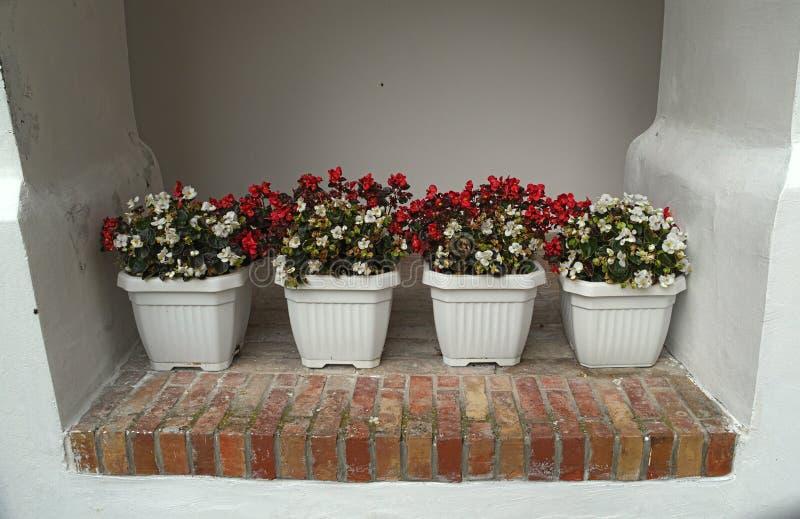 4 potten met bloeiende rode en witte bloemen op muur stock foto's