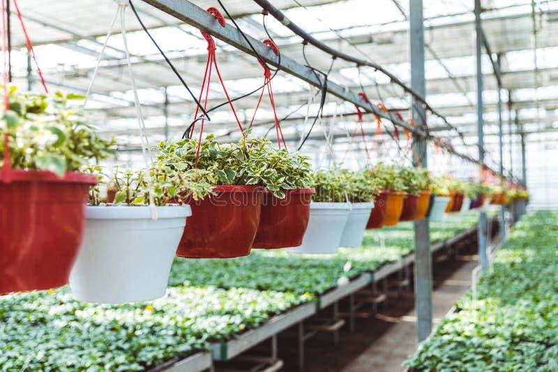 Potten met groene bloemen en installaties royalty-vrije stock foto
