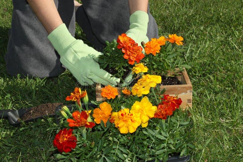 Potting-Blumen lizenzfreie stockfotografie