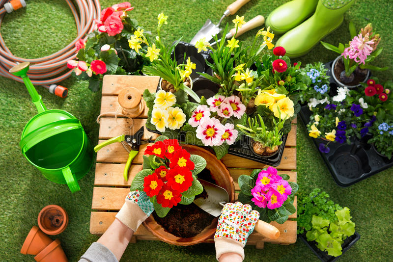 Potting flowers in the garden stock photo image of grass download potting flowers in the garden stock photo image of grass housekeeping 88362912 mightylinksfo Image collections