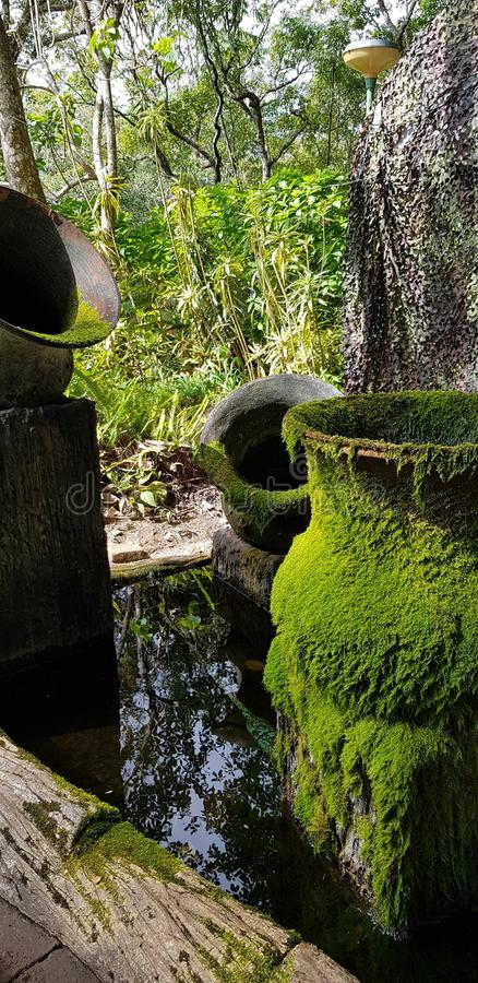 Pottrey verde do musgo imagens de stock royalty free