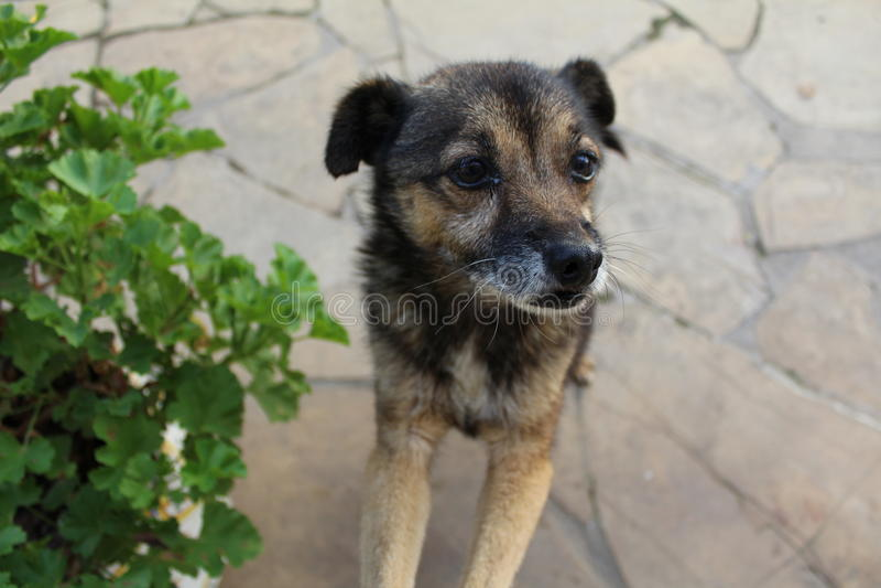 Potty, el perro fotografía de archivo libre de regalías