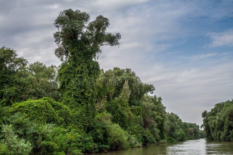 Potworów przyglądający drzewa, pełzacze, Danube delta, Rumunia, HDR zdjęcie stock