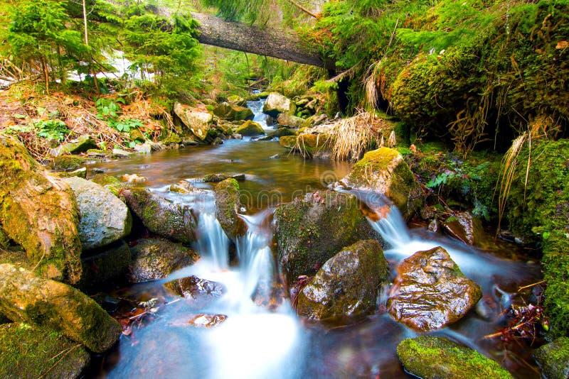 Pouca cachoeira na floresta da montanha com água de formação de espuma de seda fotografia de stock royalty free