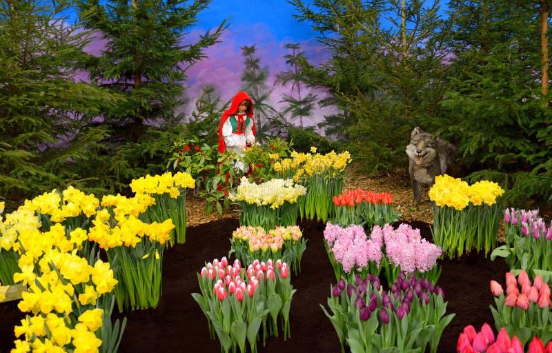 Pouca capa de equitação vermelha e o lobo em minha mola favorita jardinam imagem de stock royalty free