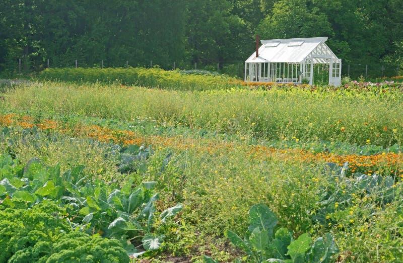 Pouca estufa em um jardim vegetal imagem de stock royalty free