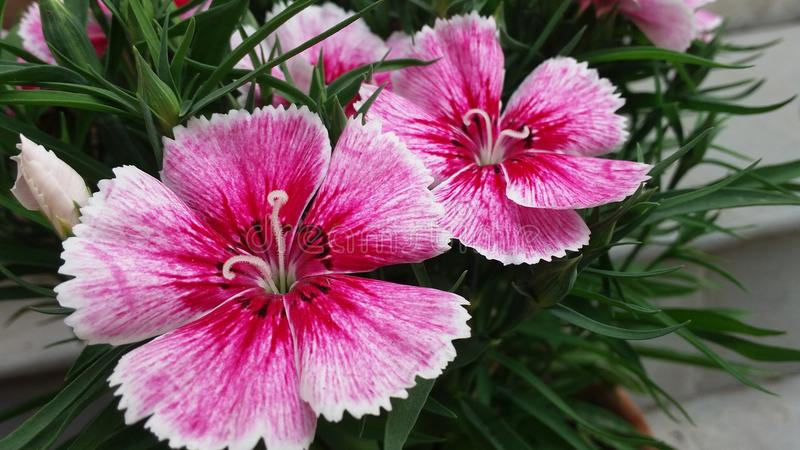 Pouca flor imagens de stock royalty free