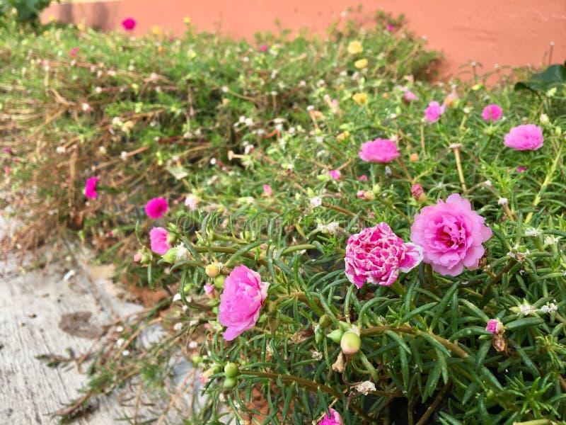 Pouca flor cor-de-rosa fotografia de stock royalty free