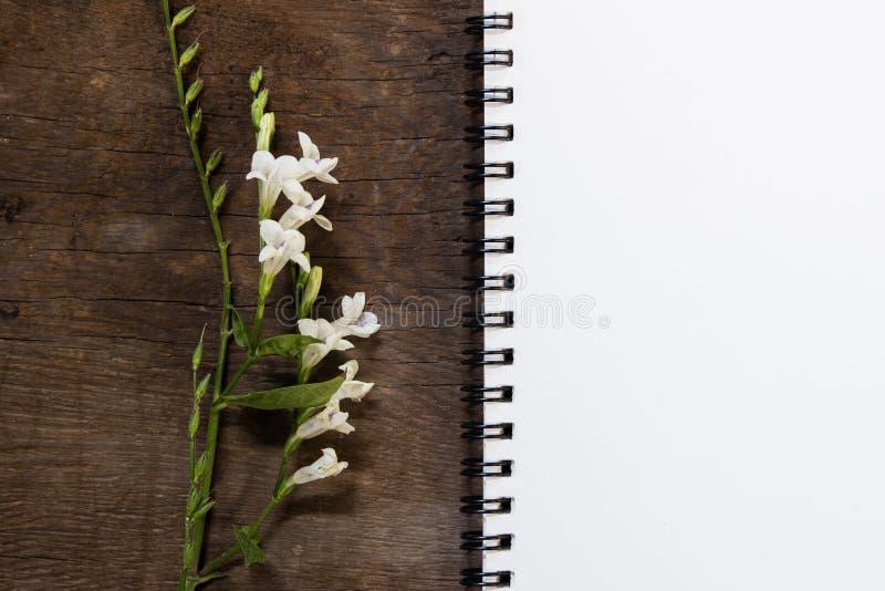 Pouca flor na placa de madeira com livro do memorando foto de stock