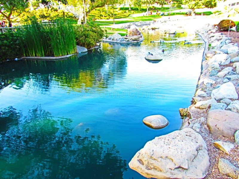 Pouca lagoa fotos de stock royalty free