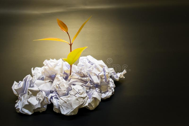 pouca planta cresce acima no papel Crumpled imagens de stock