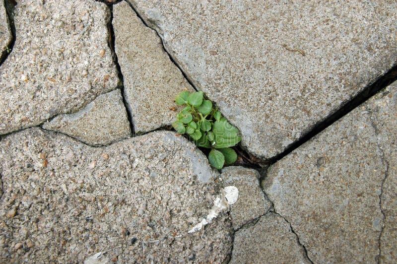 Pouca planta que cresce entre telhas fotografia de stock royalty free