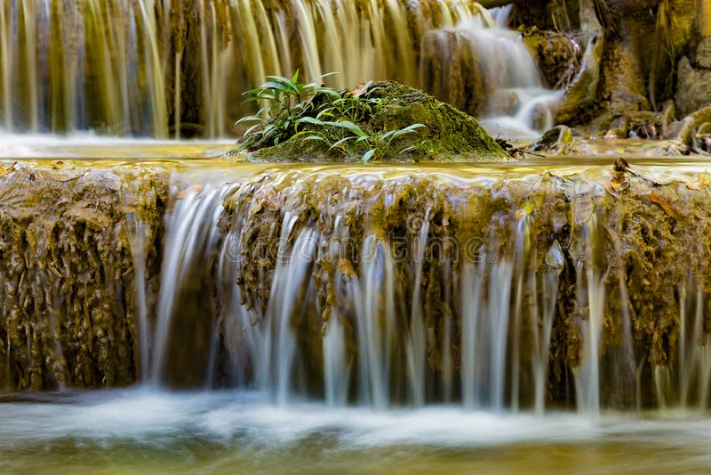 Pouca planta sobre a cachoeira tropical do córrego imagens de stock
