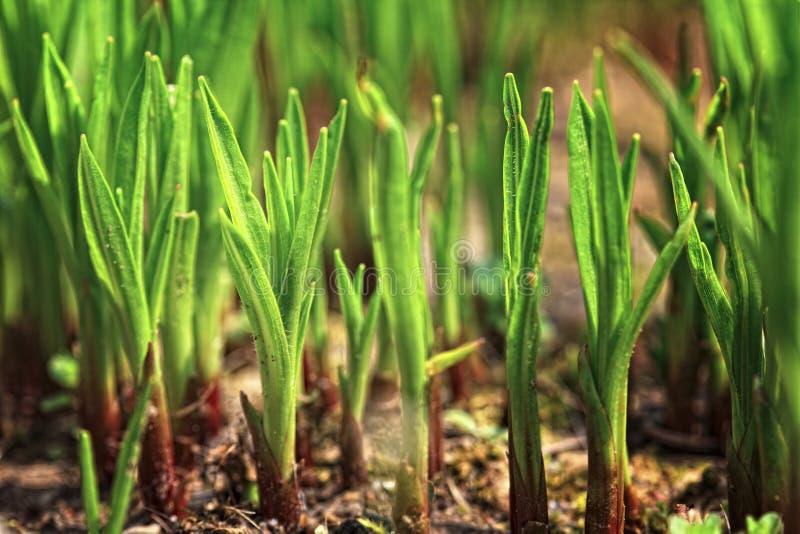 Pouca planta verde foto de stock royalty free