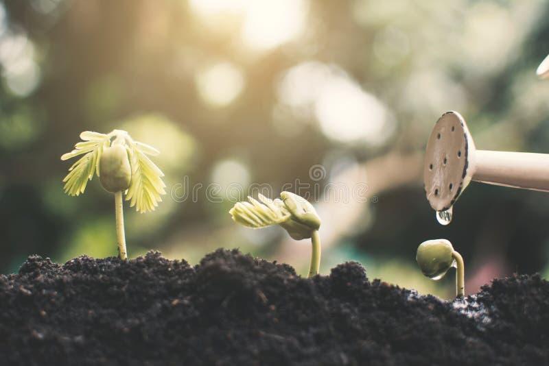 Pouca planta verde que cresce acima imagem de stock