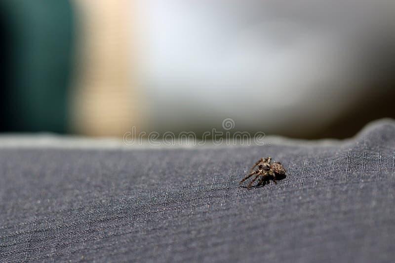 Pouco aranha que procura ao redor imagem de stock royalty free