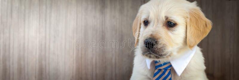 Pouco cachorrinho do negócio imagens de stock