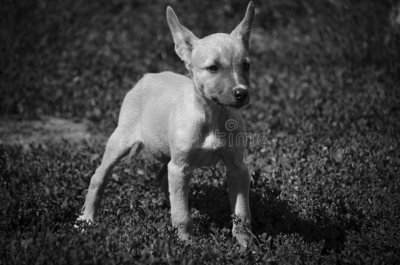 Pouco cachorrinho no abrigo animal imagens de stock