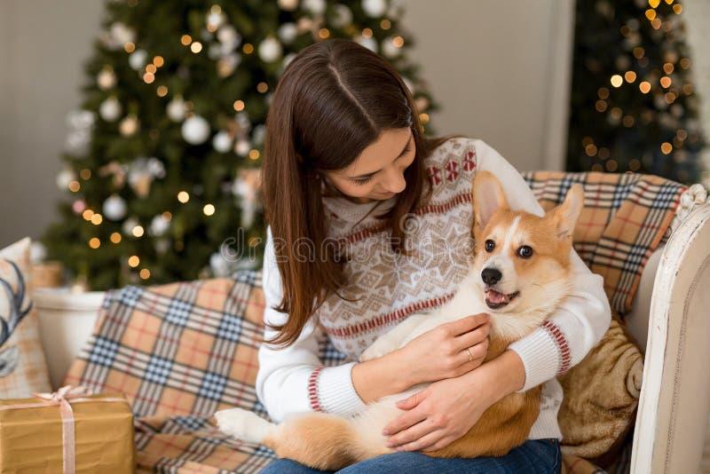 Pouco casaco de lã do Corgi de Galês do cachorrinho encontra-se no sofá no regaço de uma menina imagens de stock royalty free