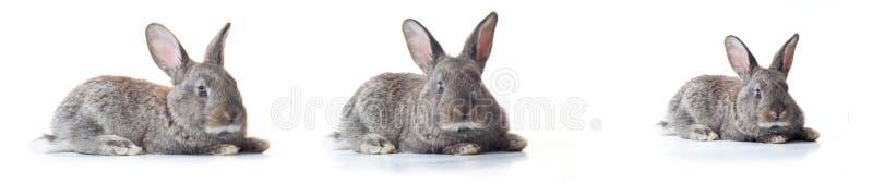 Pouco coelho imagens de stock