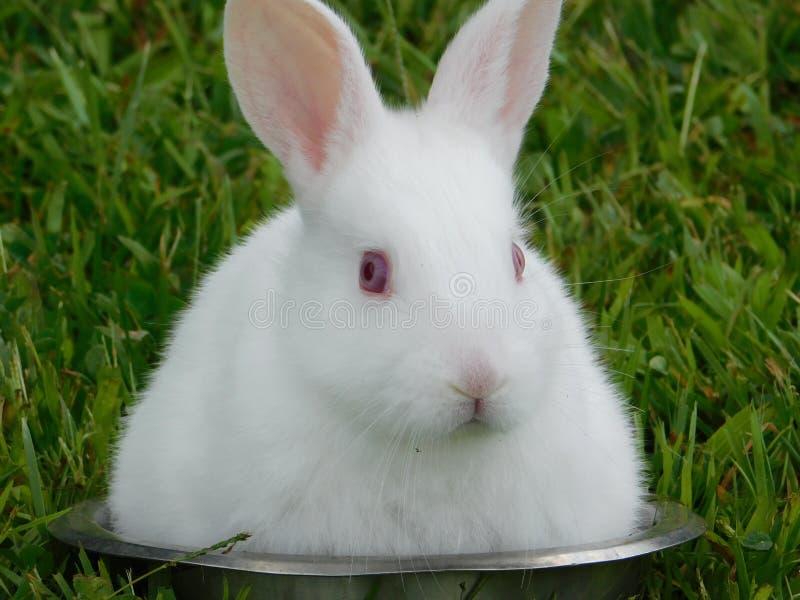 Pouco coelho branco em uma curva fotografia de stock