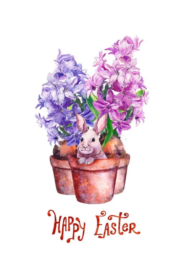Pouco coelho em um potenciômetro de flor com as flores do jacinto da mola Aquarela bonito, Páscoa feliz do texto ilustração do vetor