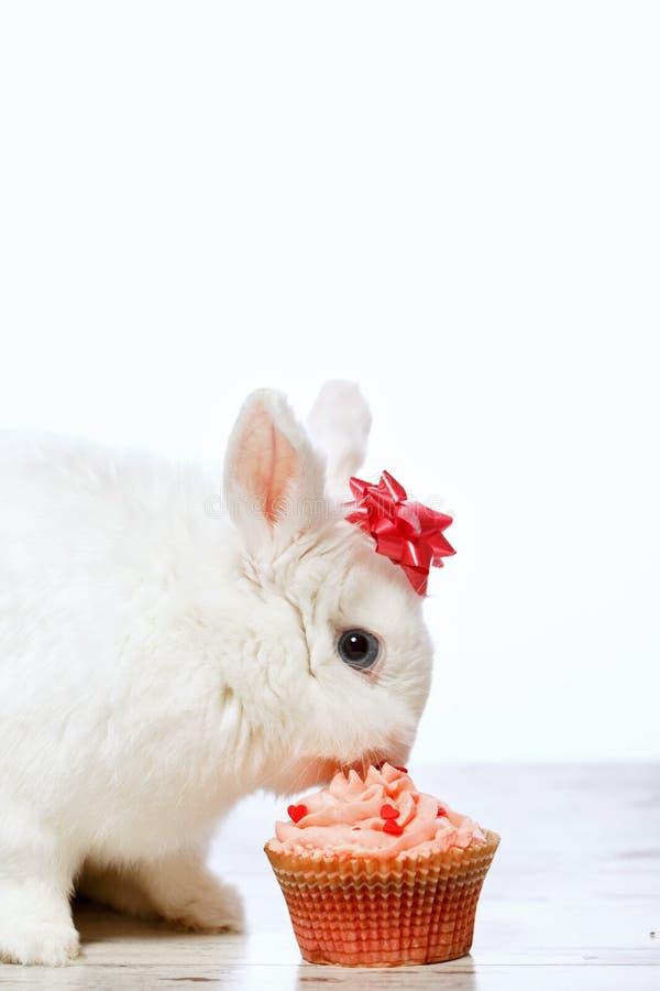 Pouco coelho que senta-se pelo queque imagens de stock royalty free