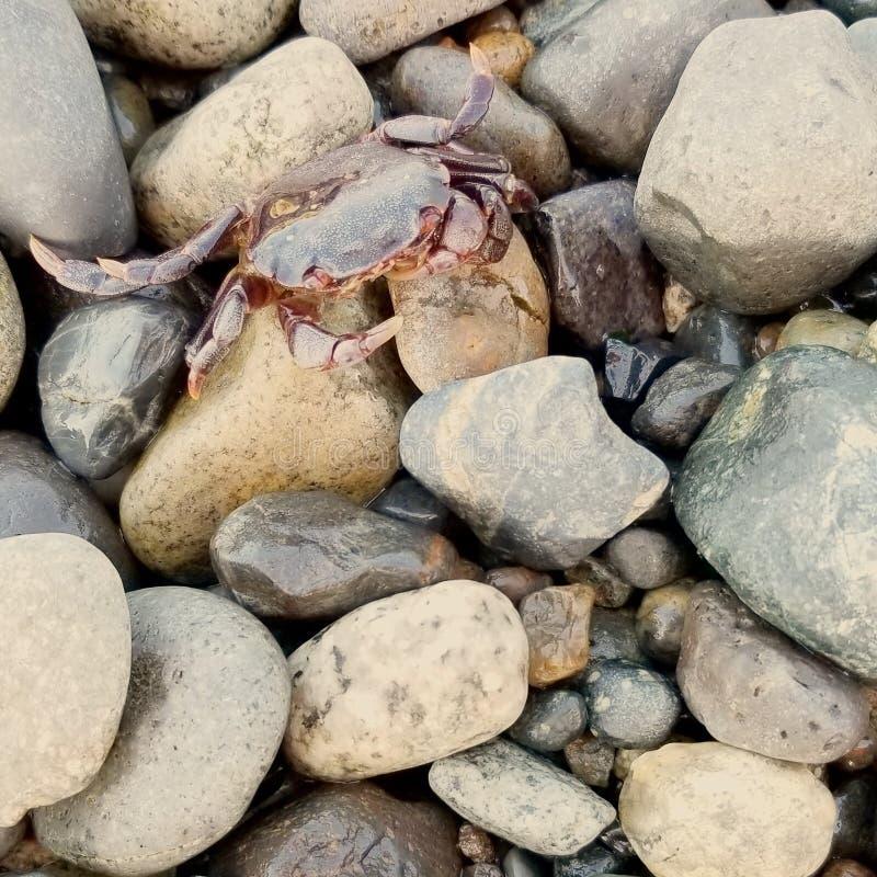 Pouco crabby fotografia de stock royalty free