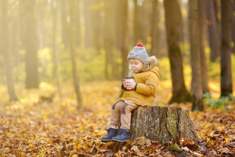 Pouco criança que anda na floresta e no cacau quente bebendo no dia frio do outono imagens de stock