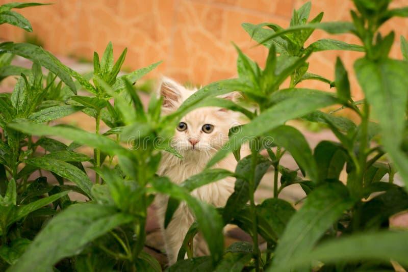 Pouco gatinho é jogar exterior na grama no jardim, procurando uma caça, fim acima, natureza no fundo fotografia de stock royalty free