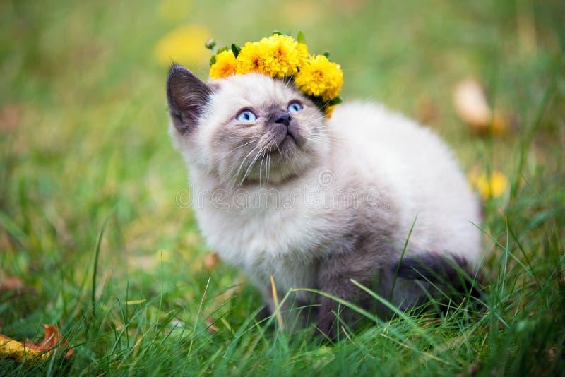Pouco gatinho, coroado com grinalda da flor fotografia de stock royalty free